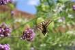 アゲハチョウとグズマリアの花