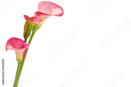 calla decoration