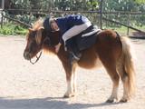 bambina abbraccia pony
