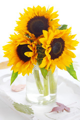 Sunflowers in glass vase on white isolated background