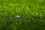 Golf Ball on Fairway poster
