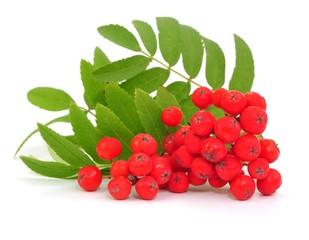 Wildfrucht