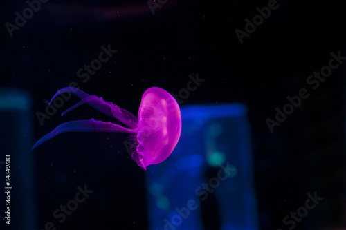 colorfull jellyfish