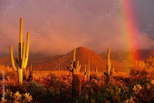 Fotobehang Woestijn Rainbow sunset at the Saguaro National Park, Arizona, USA