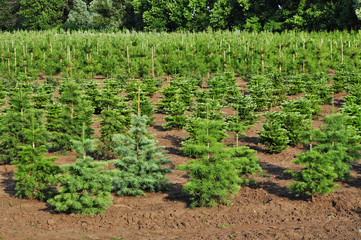 Tree nursery farm