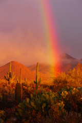 Rainbow sunset at the Saguaro National Park, Arizona, USA