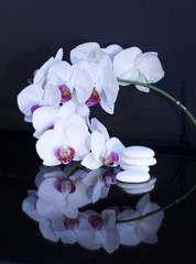 white orchid whis stones