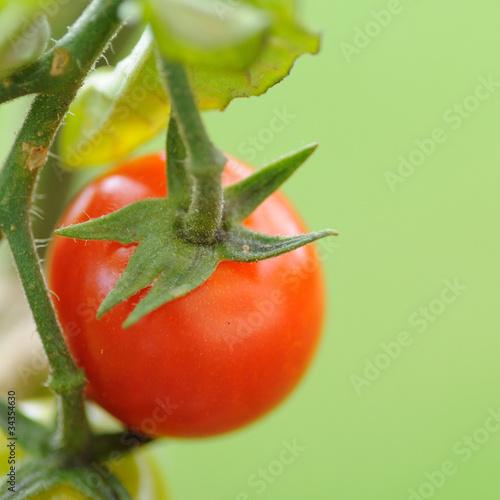 fond tomate cerise carré