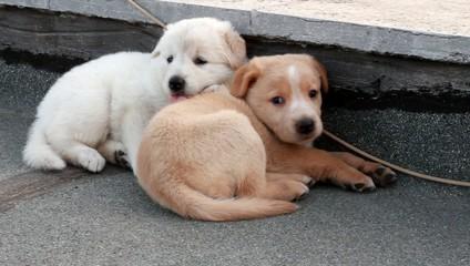 Cuccioli si riposano
