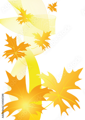 autumn maple leaf 5