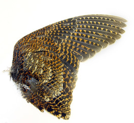 Woodcock wings (Using for hunting dog training)