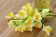 Heilpflanze, Echtes Leinkraut, Linaria vulgaris