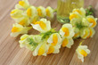 Sanfte Medizin, Echtes Leinkraut, Linaria vulgaris