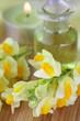 Natürliche Therapie, Echtes Leinkraut, Linaria vulgaris