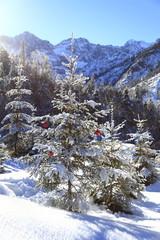 Weihnachtsbaum in der Landschaft