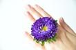 Hand mit lila Blüte
