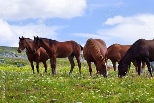 Fototapeten,berg,pferd,pferd,ackerbau