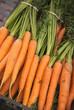 carrots - carote