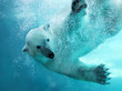 Polar bear underwater attack - 34387046