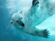 Leinwanddruck Bild - Polar bear underwater attack