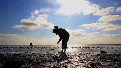 Frau sammelt Muscheln im Wattenmeer