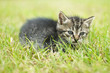 cute little cat laying in grass