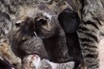 suckers - cunning little kittens