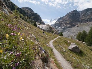 Prairie fleurie alpine le long du sentier