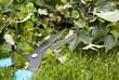 Gardening hedge trimmer