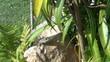 video frosch beim fliegenfangen XIII
