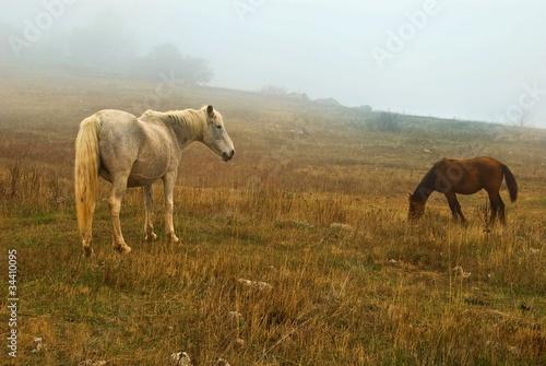 konie-na-pastwisku-we-mgle