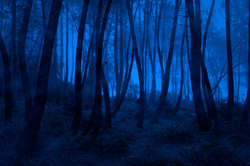 Blue foggy woods