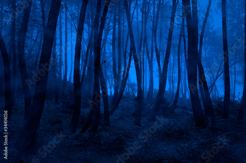 Blue foggy woods