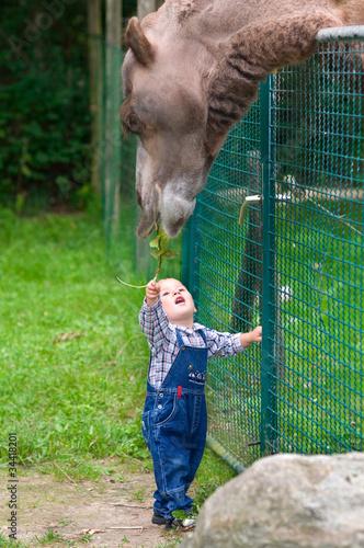 kleriner Junge füttert Kamel
