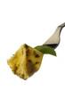 Fagottini - Pasta rellena con salsa de albahaca - Italia