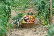 un panier de légumes frais du jardin