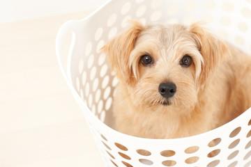 ランドリーバスケットに入った犬