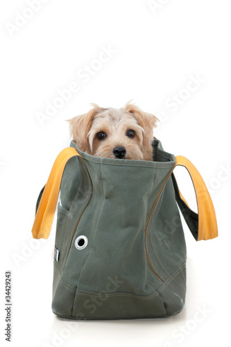 Foto op Aluminium Dragen キャリーバッグに入った犬