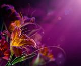 Fototapete Abstrakt - Kunst - Blume