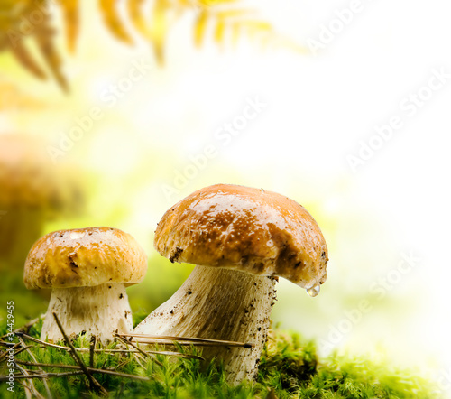 autumn forest mushrooms