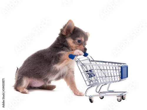 Consumer concept - chihuahua puppy with shopping cart