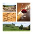 Vin, bouteille, raisin, vigne, œnologie, boisson, Saint-Emilion