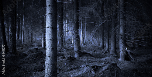 Fotobehang Bossen Spooky forest