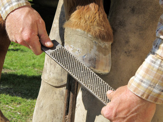Rasping a Horseshoe and Hoof
