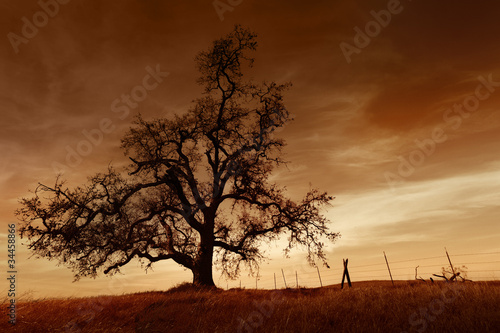 Bare Oak Tree at Sunset