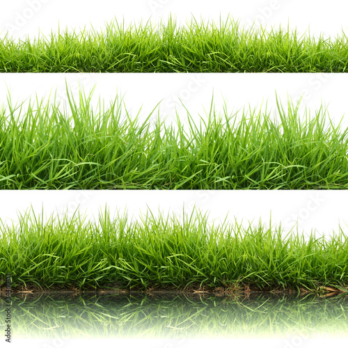 3 style fresh spring green grass