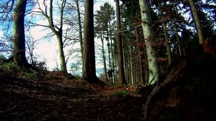 Mountainbiker auf einem Waldweg
