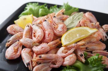 Coldwater shrimps