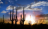 Sun set and Saguaro cactus in Saguaro national park