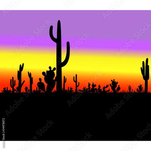 cactus silhouette in desert